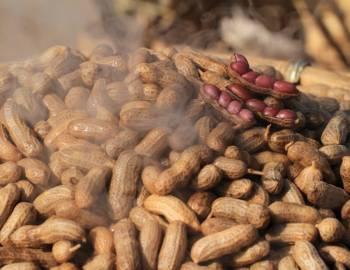 Boiled Peanut